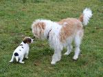 Sally mit Sico