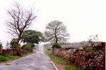 à la sortie de Rabanal del Camino