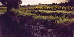 des vignes du Bosc