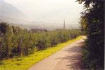 des kilomètres dans les vergers du Valvenosta (Trentin Haut-Adige)