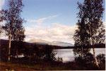 bouleaux du bord du lac