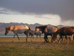 chevaux au soleil couchant