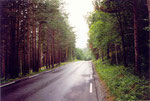 la forêt de Storfjord