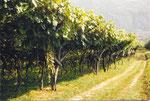 des kilomètres dans les vignes du Valvenosta (Trentin Haut-Adige)
