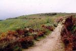 le sentier de Cebreiro