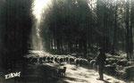 Clairière en forêt des Landes