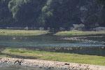 Croisière sur la Rivière Li
