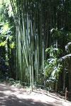 La bambouseraie d'Anduze