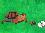 Tortoise © Pepponi Art