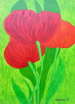 Nature & Flowers_ Wild Tulip © Pepponi Art