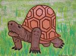 Tortoise Heidi © Pepponi Art