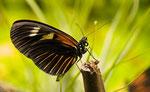 Mein erster Schmetterling 2008