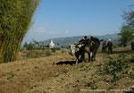 Village de Tapting