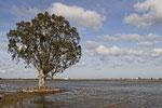 Rizière delta de l'Ebre - Patrick Choinier
