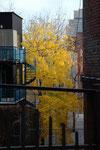 Comme un arbre dans la ville, je suis né dans le béton - Isabelle Leblic