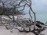 Bois mort échoué sur le rivage - Isabelle Leblic