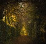 Lumière d'automne - Danielle Bonardelle
