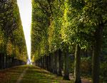 Allée au parc de Sceaux - Marie-Agnès Barrère