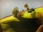 Bosquet d'arbres dans la lumière automnale de fin de journée - Isabelle Leblic