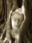 Bouddha enchevêtré entre les racines - Corinne Brachet-Ducros
