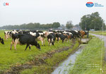 Radio Nederland - 2012