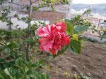 die erste Blüte in unserem Garten :)