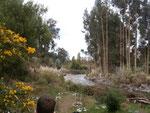 Parque de Sueño (Traumpark)