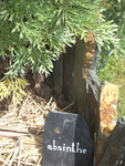 plante-medicinale-la-claie-des-landes