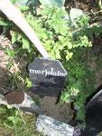 les simples du jardin médiéval