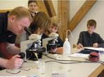 Schüler entdecken Wasserspeicherzellen in Torfmossblättchen.