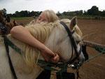 Pferdeliebe 1