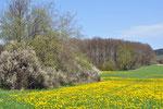 ist das eine herrliche Frühlingswiese? jaaaaaaaaaaaaa