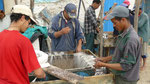 Vers Essaouira : préparation des lignes de pêche