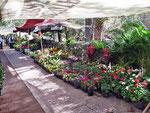 Blumenmarkt im Parque Juárez...