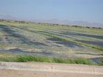 El Centro - Bewässerung