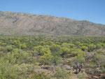 Saguaro Ntl. Park - Überblick
