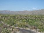 Saguaro Ntl. Park