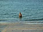 ...Neptun entsteigt den Fluten...
