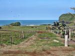 ...ein erster Blick auf den Golf von Mexico