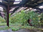 """und der """"Bahnhof"""" heute - ein üppiges grünes Treibhaus"""