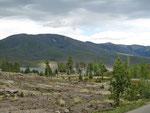 Green Ridge Campground - hier gab's noch vor 2 Jahren Wald