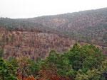 ...Zeugen des Waldbrandes vom Sommr 2011