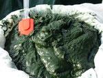 Biomasse récoltée