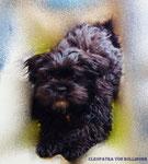 Cleo mit 8 Monaten