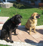 NICO  & JOHN, Labrador-Mix & Leonberger-Mix, April 2011