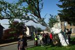 Le plus vieil arbre de France (un aubépin de 1800 ans)