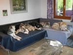 Ein warmes Sofa, wenn es draussen Hudelwetter ist