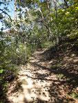 Forêt - sentier de l'abricot