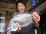 5月25日 磯釣りで戸高さん チヌ42.5㎝