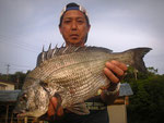 5月19日 磯釣りで増田さん 良型チヌ46㎝を頭に2匹